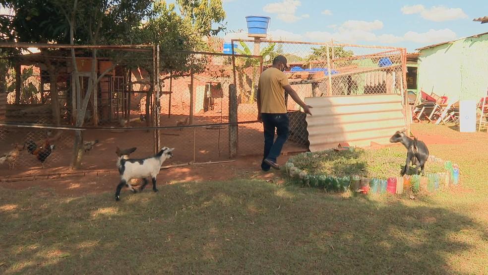 Escola no DF usa animais para ajudar na inclusão de autistas — Canal Autismo / Revista Autismo